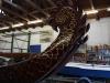 thumbs drachenboot 008 Drachenboot